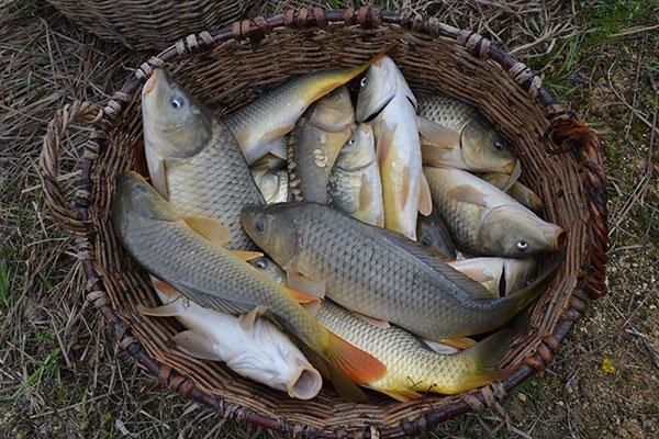 озерное охота рыбалка